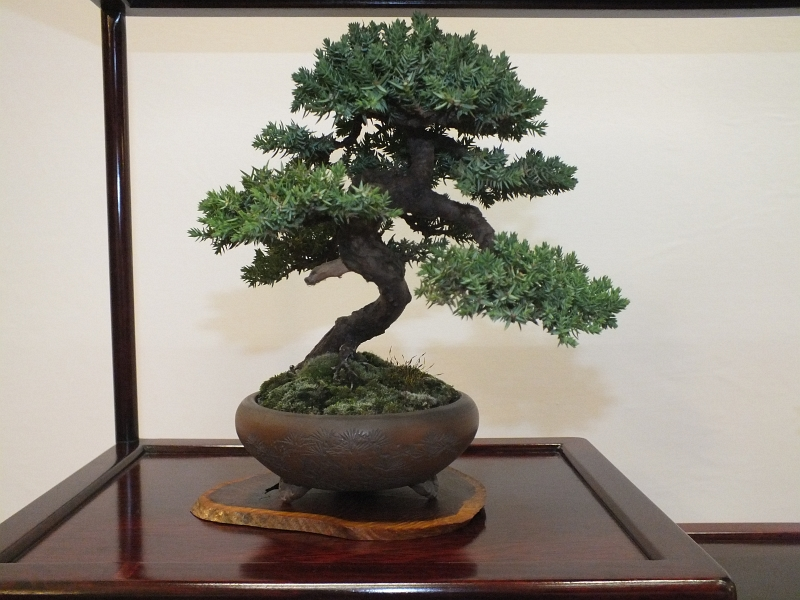EUK Bonsai Ten 2013 040ca