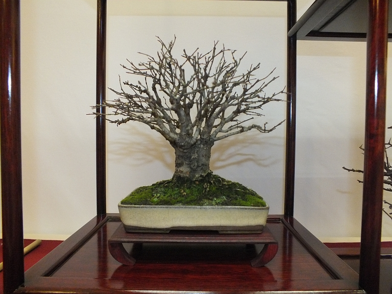 EUK Bonsai Ten 2013 040fa
