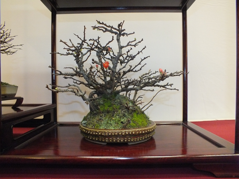 EUK Bonsai Ten 2013 040fd