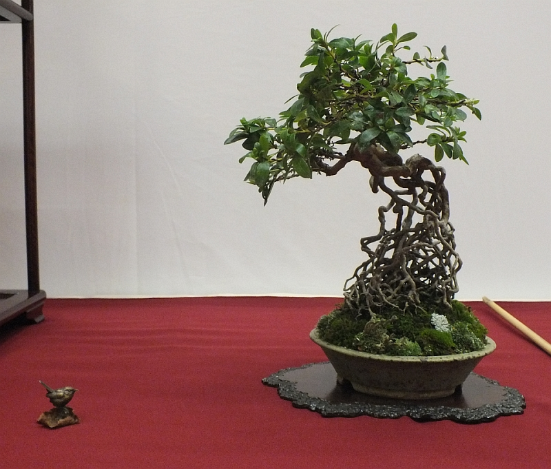 EUK Bonsai Ten 2013 040g