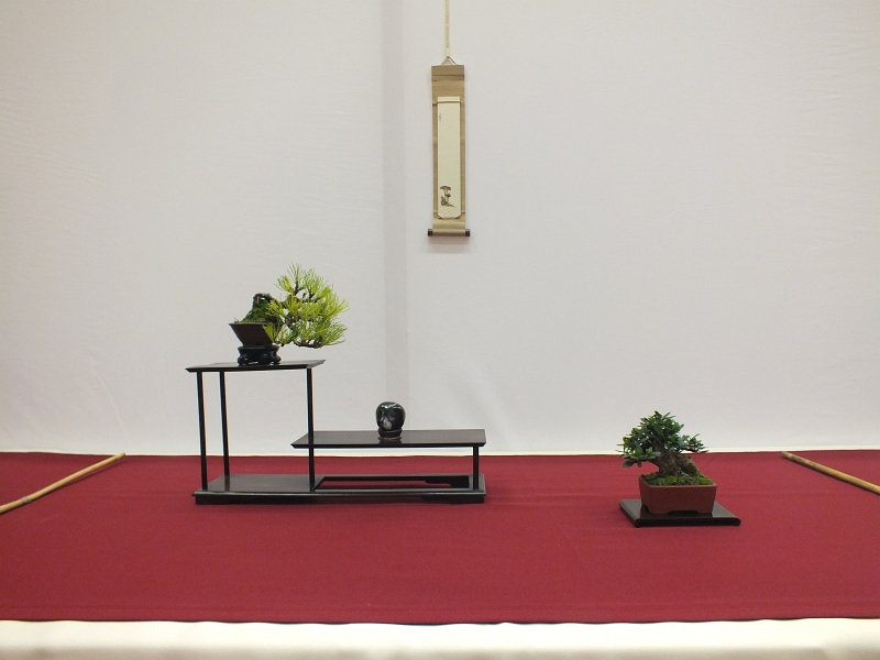 EUK Bonsai Ten 2013 041ab