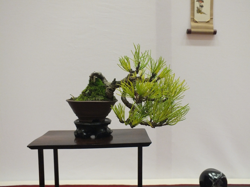 EUK Bonsai Ten 2013 041ba