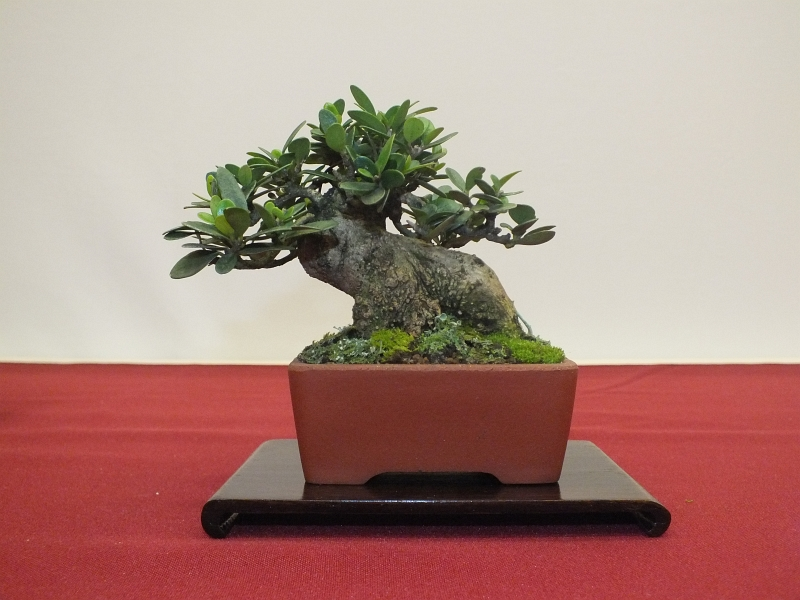 EUK Bonsai Ten 2013 041db