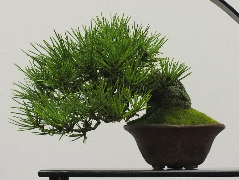 EUK Bonsai Ten 2013 042c