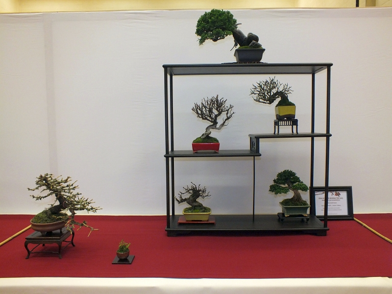 EUK Bonsai Ten 2013 043ba