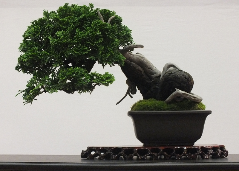 EUK Bonsai Ten 2013 043d