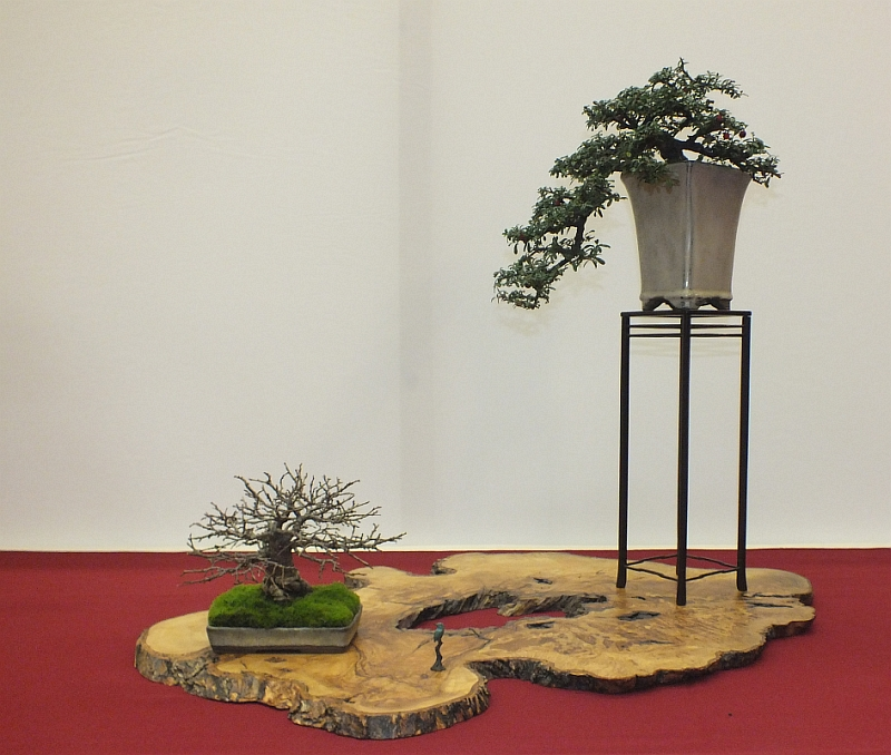 EUK Bonsai Ten 2013 044a