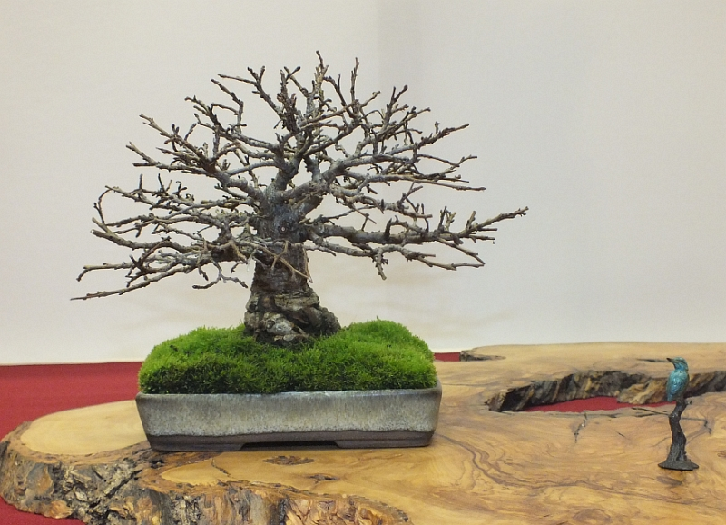 EUK Bonsai Ten 2013 044f