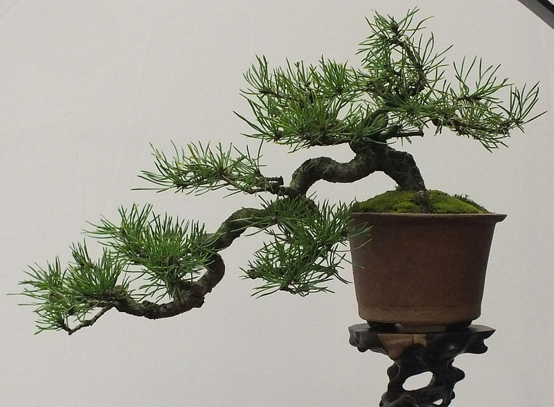 EUK Bonsai Ten 2013 045c