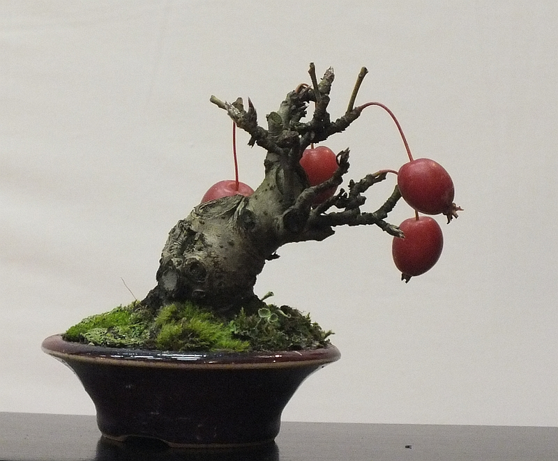 EUK Bonsai Ten 2013 045d