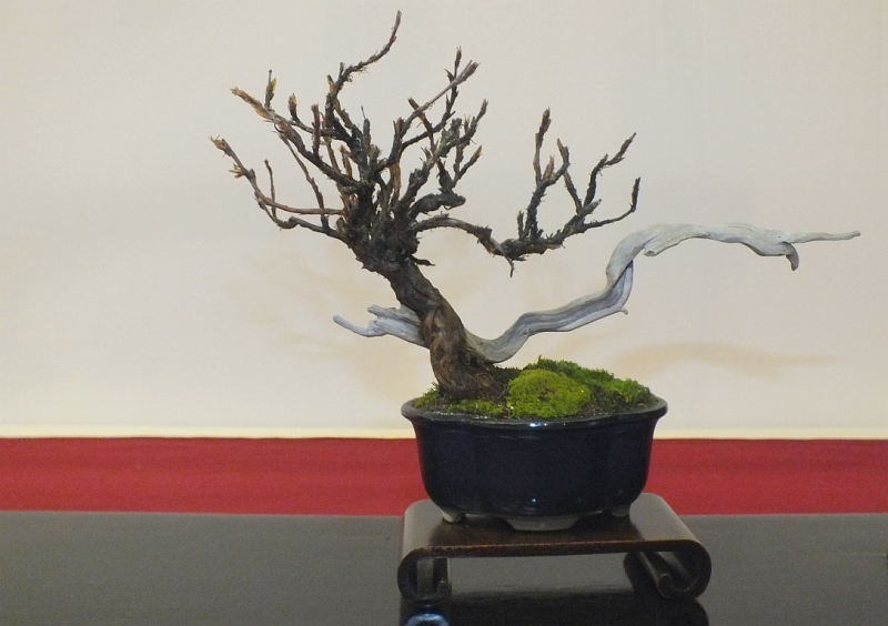 EUK Bonsai Ten 2013 045fa