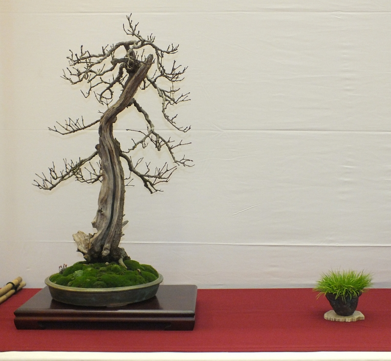 EUK Bonsai Ten 2013 047a