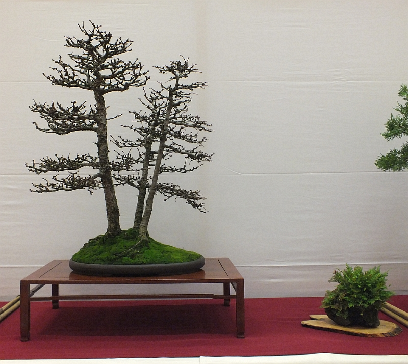EUK Bonsai Ten 2013 048aa