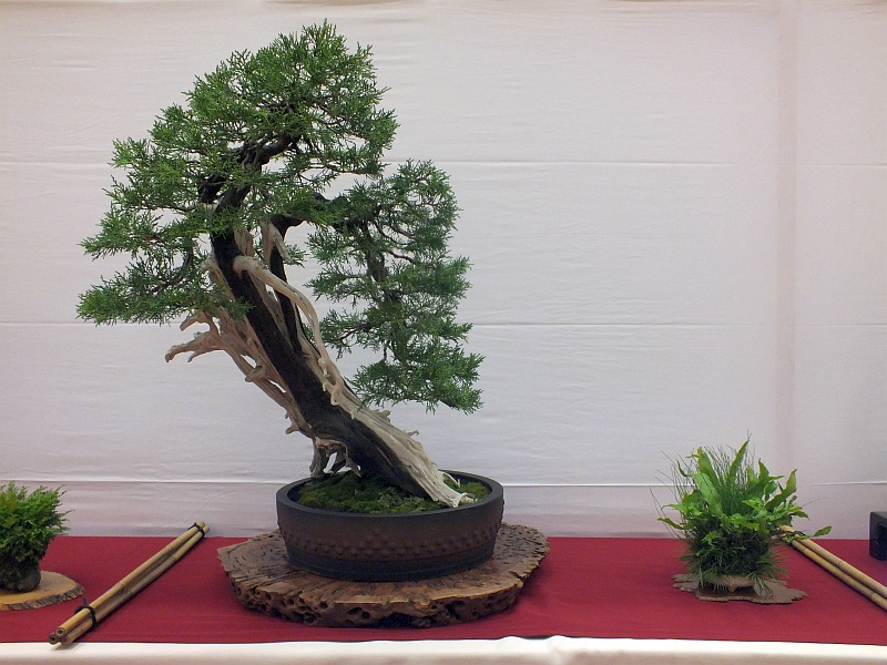 EUK Bonsai Ten 2013 049g