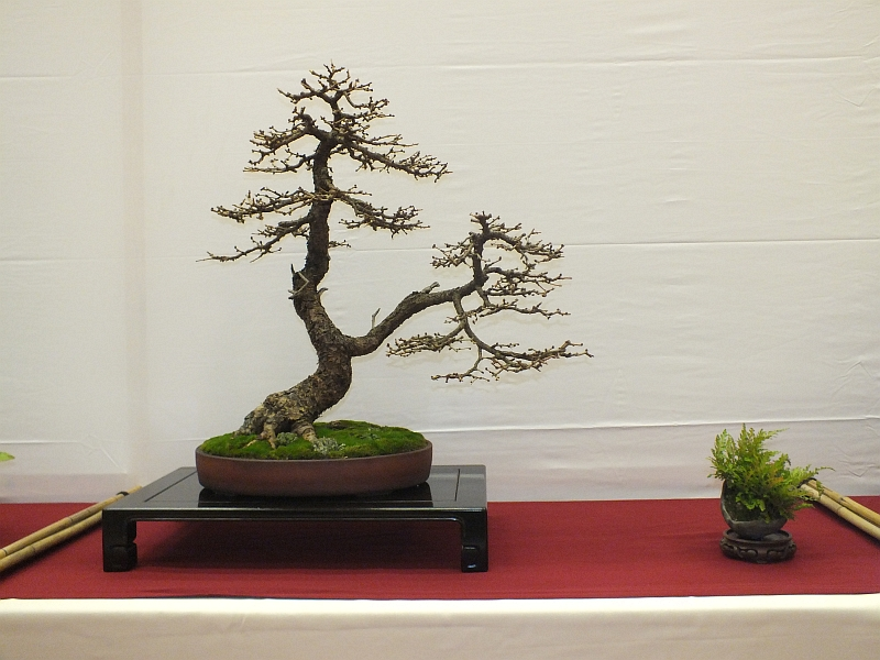 EUK Bonsai Ten 2013 050d