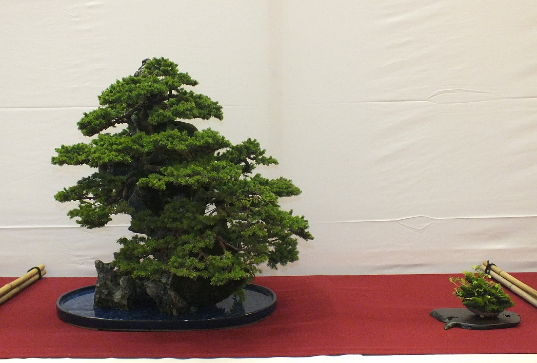 EUK Bonsai Ten 2013 051a