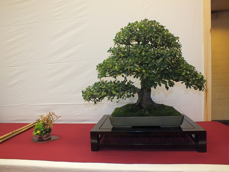 EUK Bonsai Ten 2013 052b