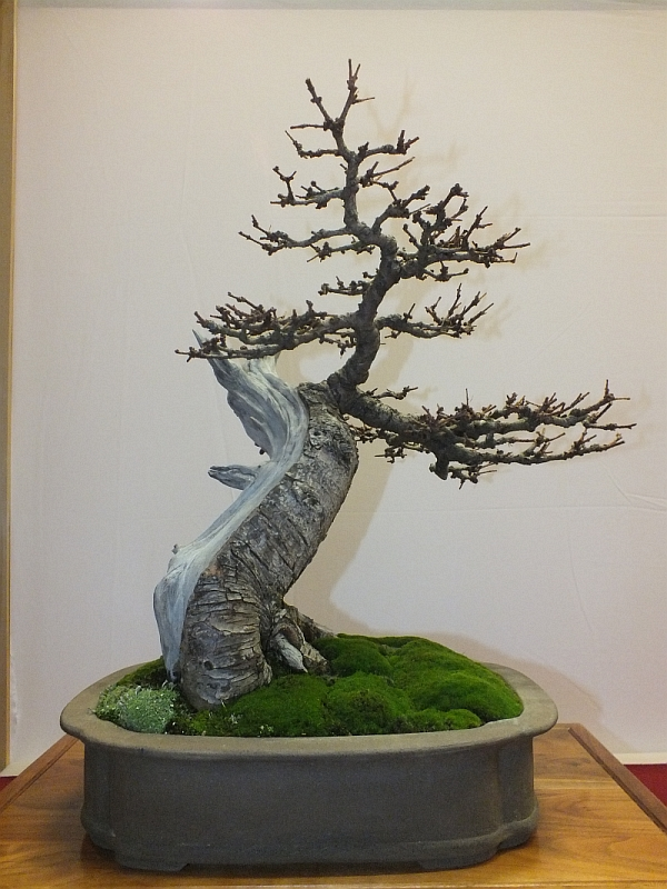 EUK Bonsai Ten 2013 053e