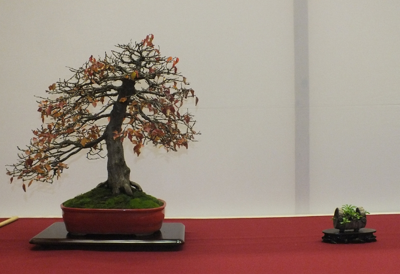 EUK Bonsai Ten 2013 054b
