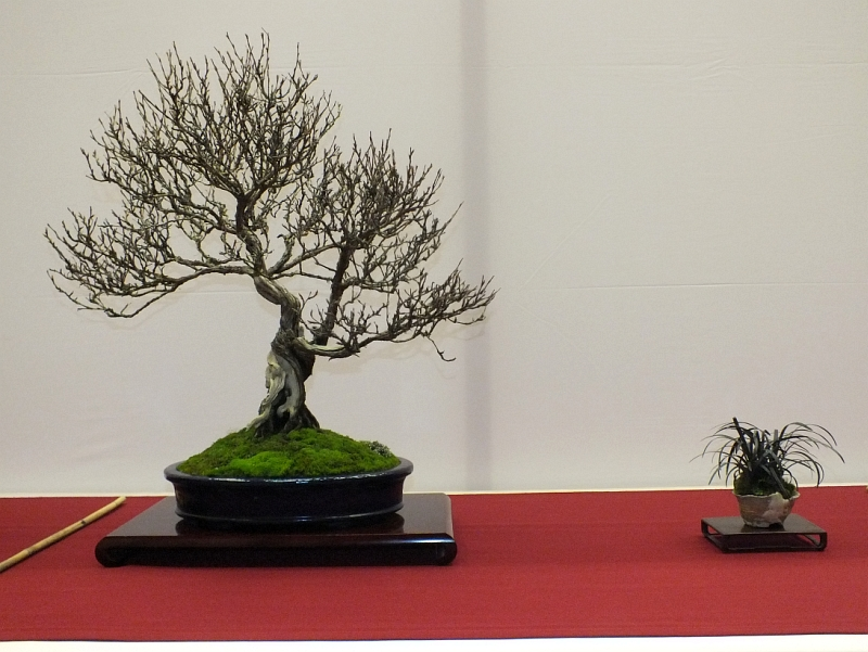 EUK Bonsai Ten 2013 056a
