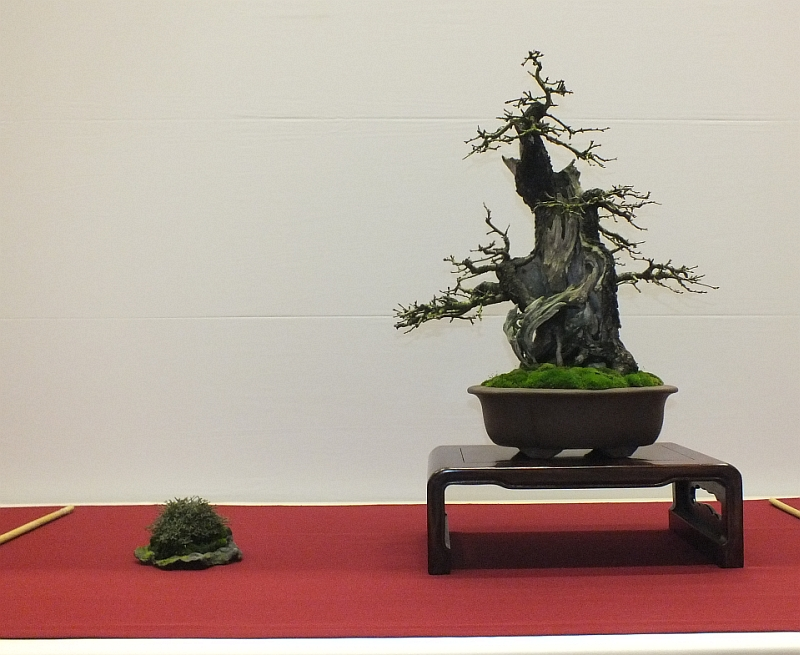 EUK Bonsai Ten 2013 057a
