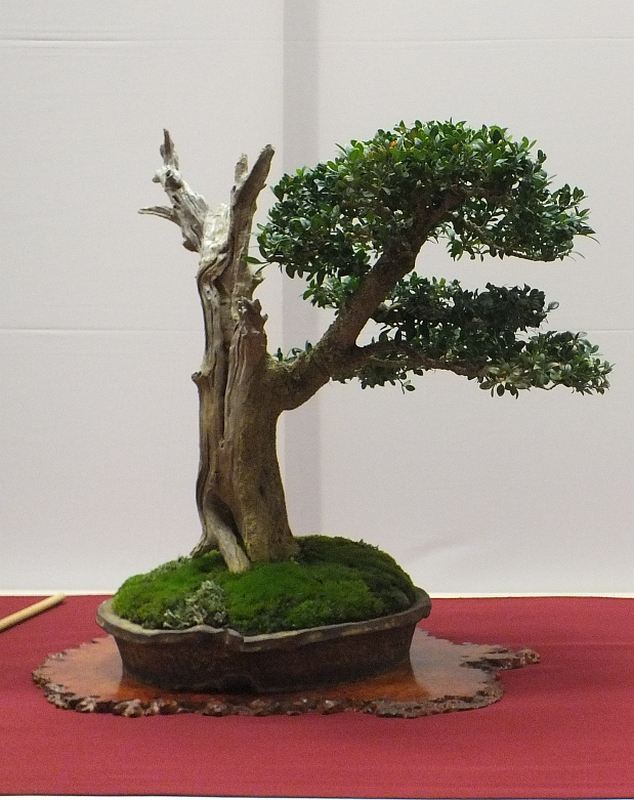 EUK Bonsai Ten 2013 058b