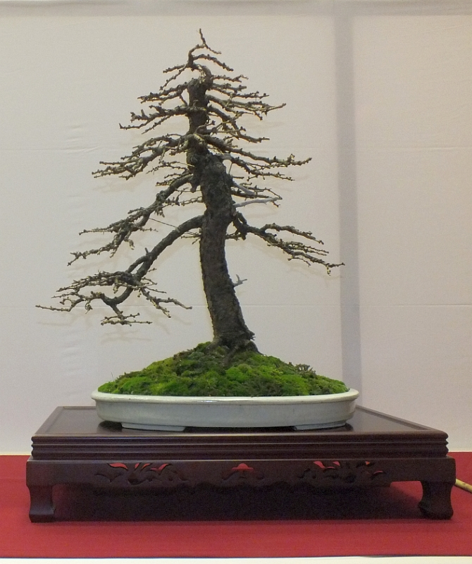 EUK Bonsai Ten 2013 059b