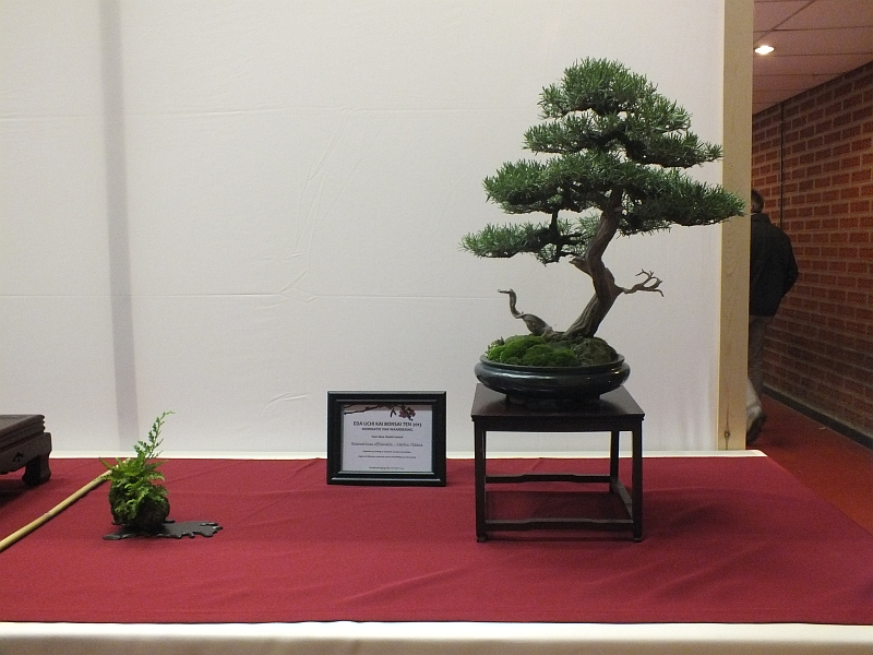 EUK Bonsai Ten 2013 060d