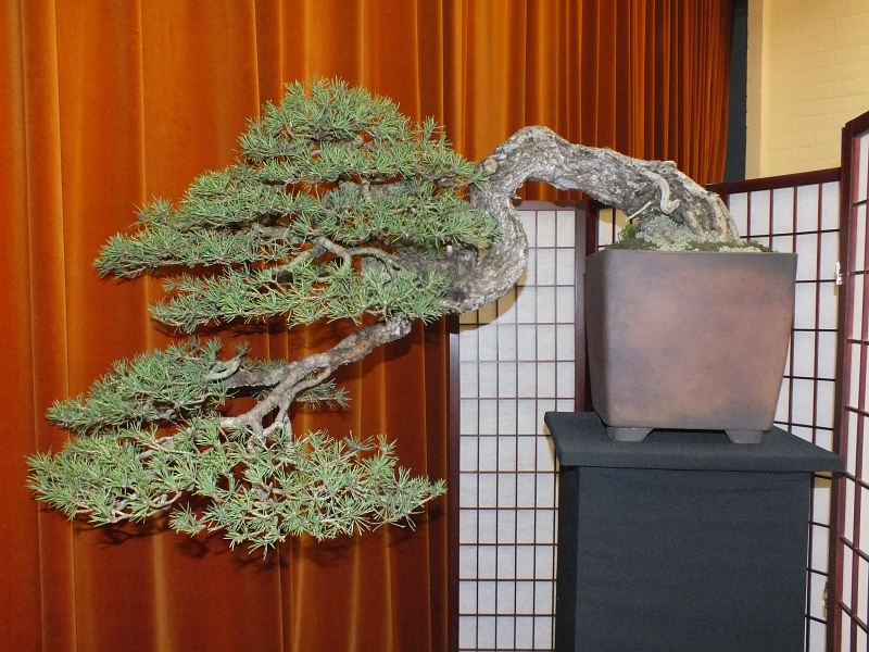 EUK Bonsai Ten 2013 061c