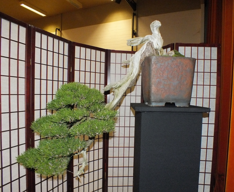 EUK Bonsai Ten 2013 062a