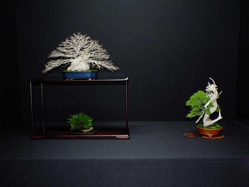 EUK Bonsai Ten 2013 Podium in black 001