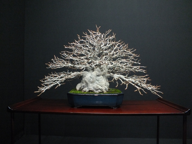 EUK Bonsai Ten 2013 Podium in black 001a