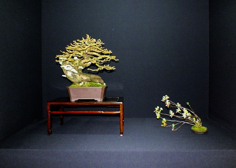 EUK Bonsai Ten 2013 Podium in black 003