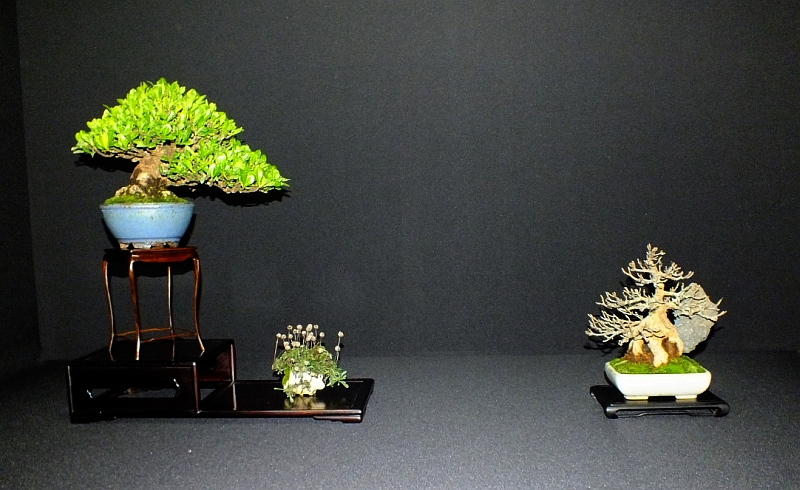 EUK Bonsai Ten 2013 Podium in black 006