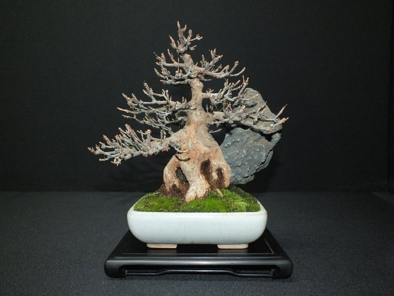 EUK Bonsai Ten 2013 Podium in black 006c
