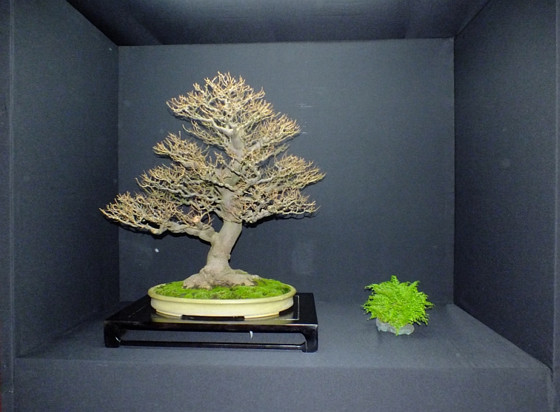 EUK Bonsai Ten 2013 Podium in black 007