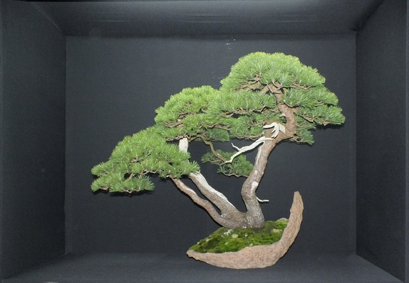 EUK Bonsai Ten 2013 Podium in black 008a