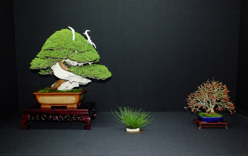 EUK Bonsai Ten 2013 Podium in black 009
