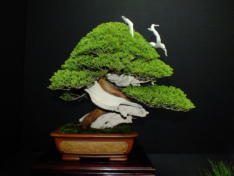 EUK Bonsai Ten 2013 Podium in black 010