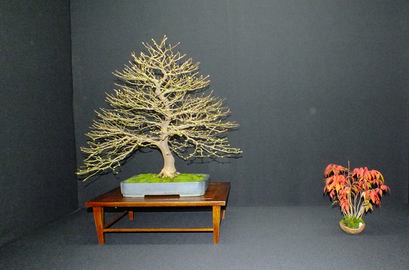 EUK Bonsai Ten 2013 Podium in black 014