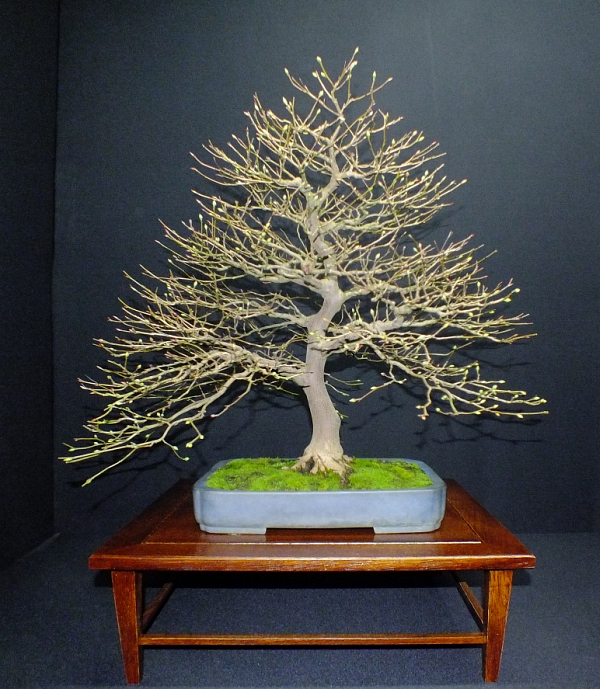 EUK Bonsai Ten 2013 Podium in black 015