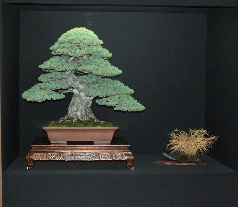 EUK Bonsai Ten 2013 Podium in black 018