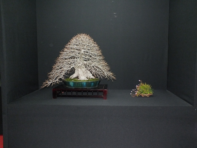 EUK Bonsai Ten 2013 Podium in black 031