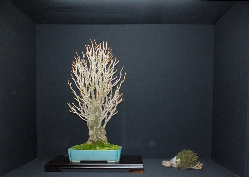 EUK Bonsai Ten 2013 Podium in black 032
