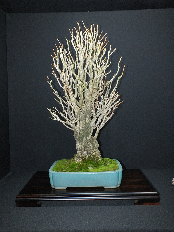 EUK Bonsai Ten 2013 Podium in black 032a