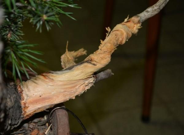 Mooie jin, waar je de vezels van het hout kan volgen...
