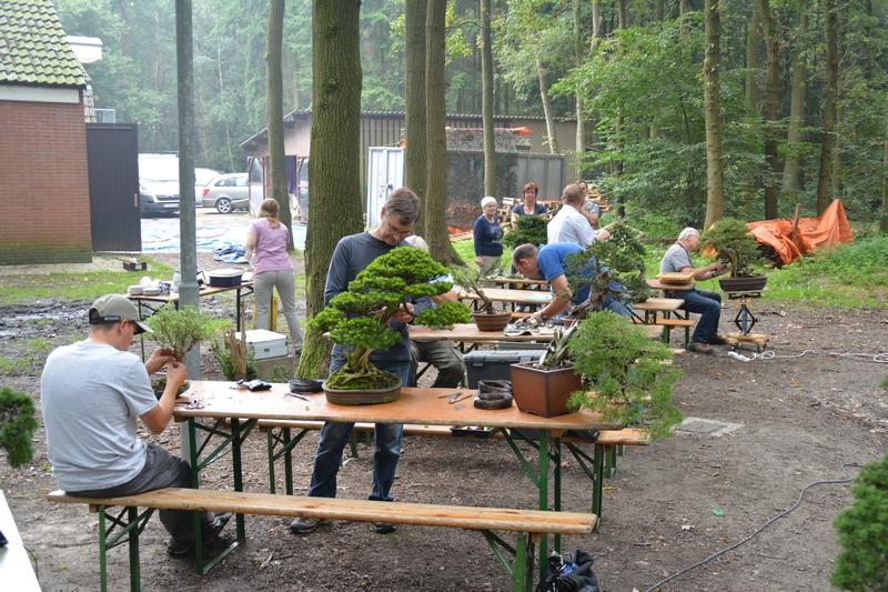 EUK Bonsai Kamp Veldhoven 017