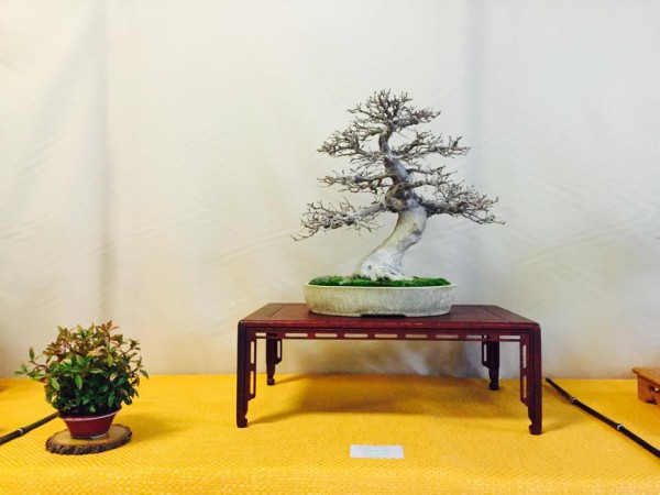 First prize Carpinus Marcio