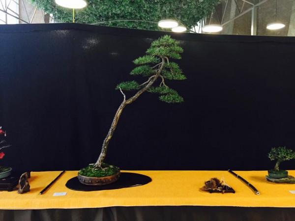 Third prize Pinus Marcio Meruje