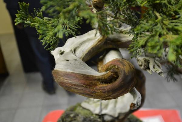 Demo rotsbeplanting JP Polmans 1 december 2014 002